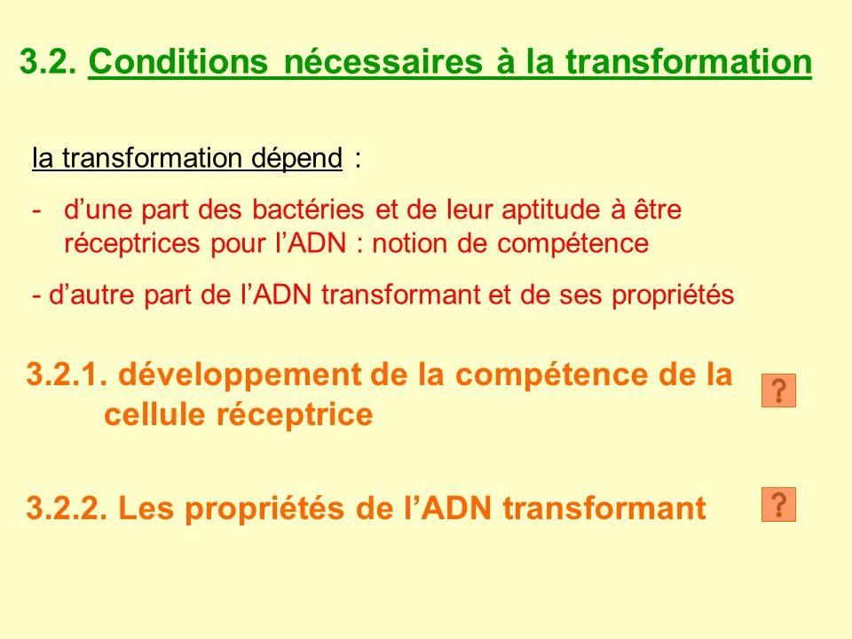 3.2. Conditions nécessaires à la transformation la transformation dépend : -dune part des bactéries et de leur aptitude à être réceptrices pour lADN :