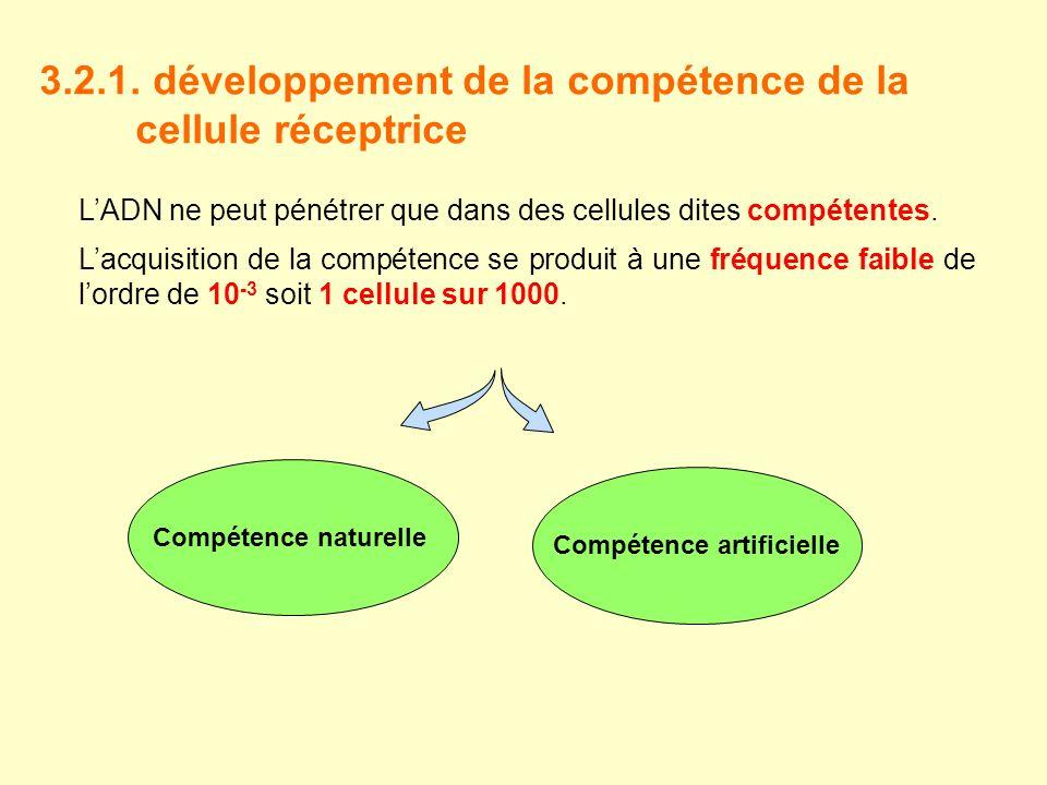 3.2.1. développement de la compétence de la cellule réceptrice LADN ne peut pénétrer que dans des cellules dites compétentes. Lacquisition de la compé