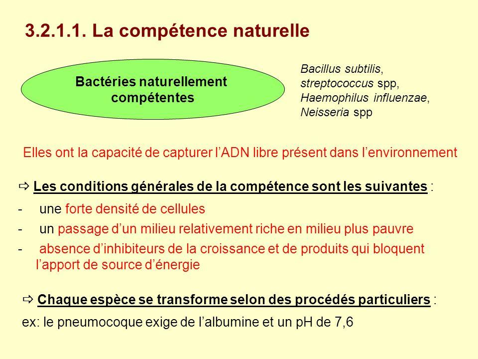 3.2.1.1. La compétence naturelle Bactéries naturellement compétentes Bacillus subtilis, streptococcus spp, Haemophilus influenzae, Neisseria spp Elles