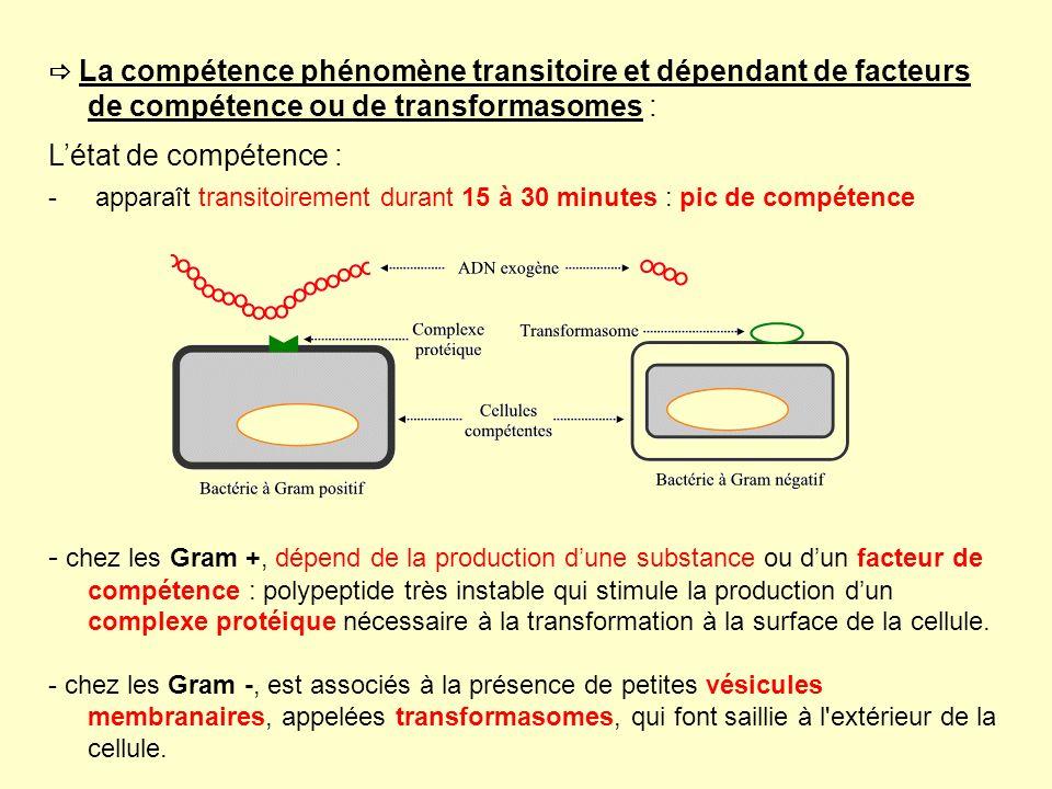 La compétence phénomène transitoire et dépendant de facteurs de compétence ou de transformasomes : Létat de compétence : - apparaît transitoirement du