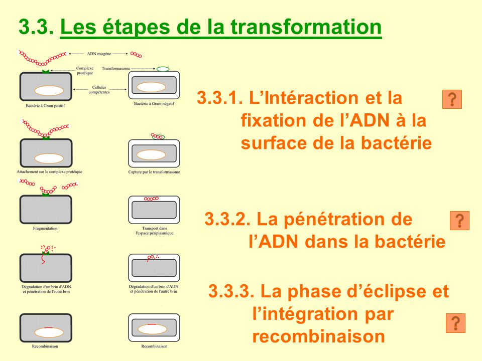 3.3.Les étapes de la transformation 3.3.1.