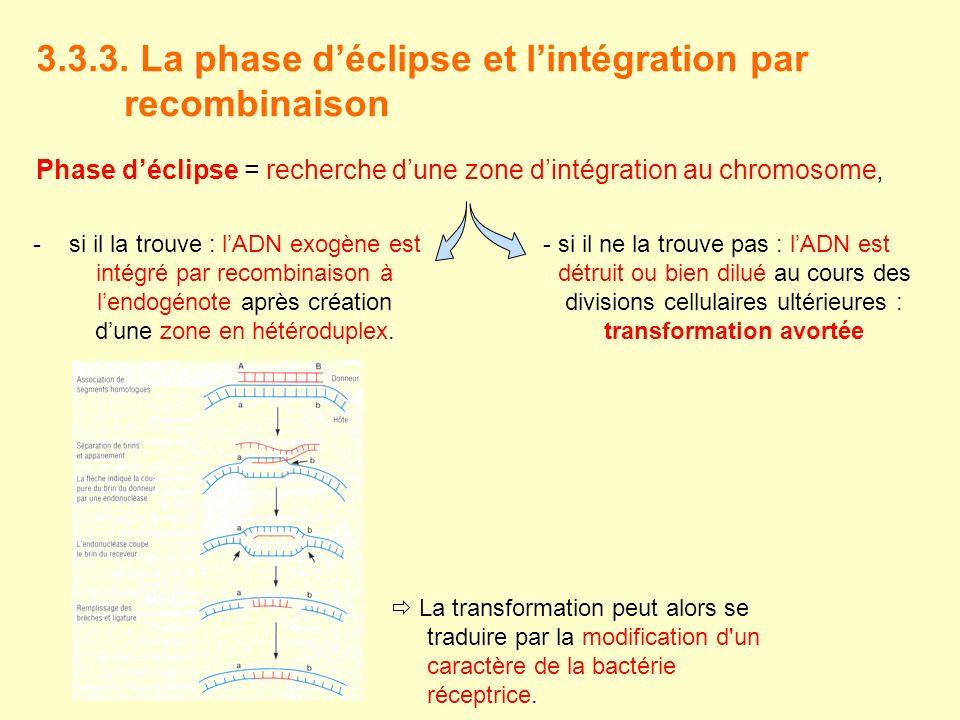 3.3.3. La phase déclipse et lintégration par recombinaison Phase déclipse = recherche dune zone dintégration au chromosome, -si il la trouve : lADN ex