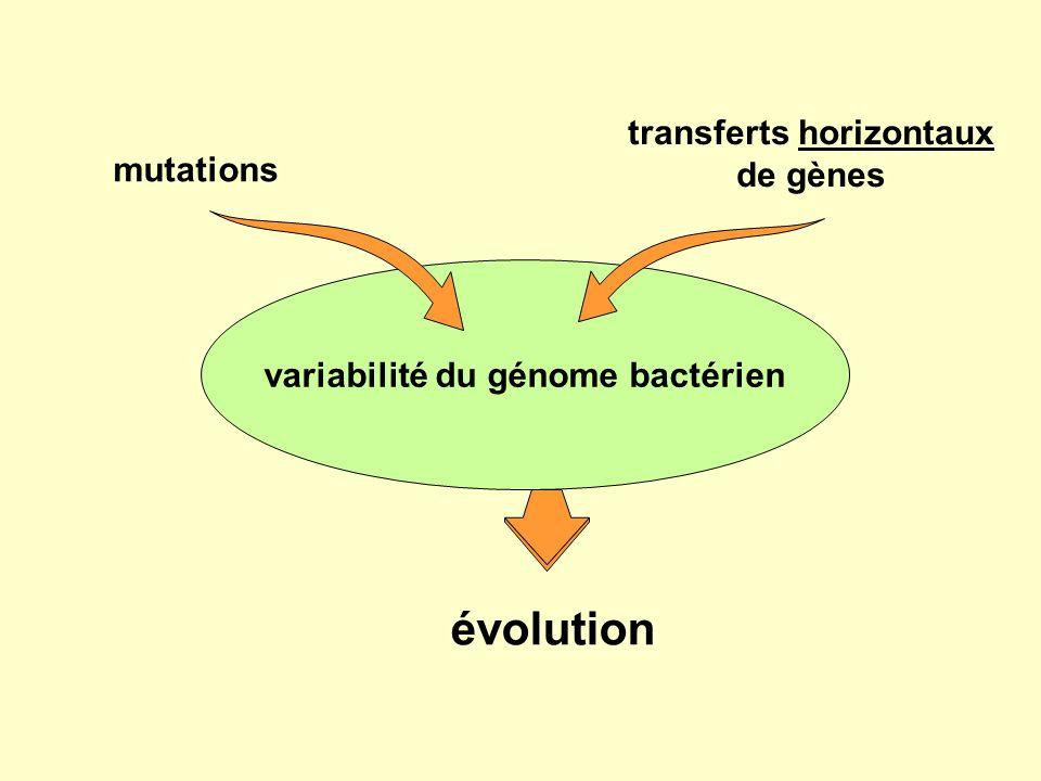 mutations variabilité du génome bactérien transferts horizontaux de gènes évolution