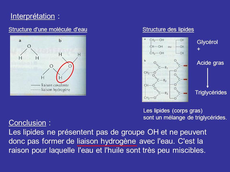 Interprétation : Structure d'une molécule d'eauStructure des lipides Glycérol + Acide gras Triglycérides Les lipides (corps gras) sont un mélange de t