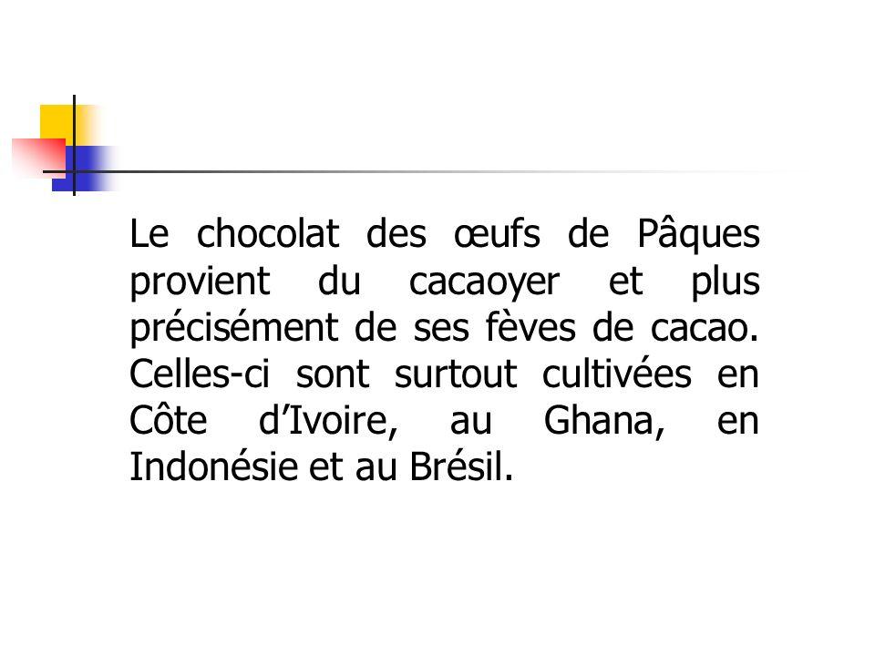 Le chocolat des œufs de Pâques provient du cacaoyer et plus précisément de ses fèves de cacao. Celles-ci sont surtout cultivées en Côte dIvoire, au Gh