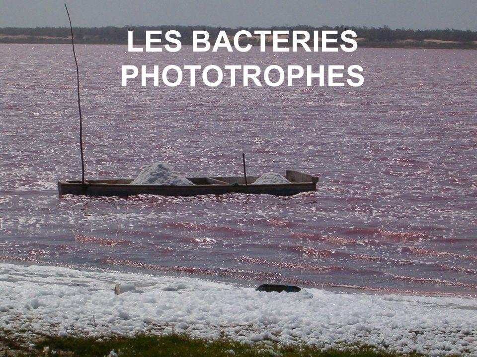 Programme Bactéries phototrophes.Les étudiants devront simplement pouvoir analyser un document présentant de tels métabolismes.