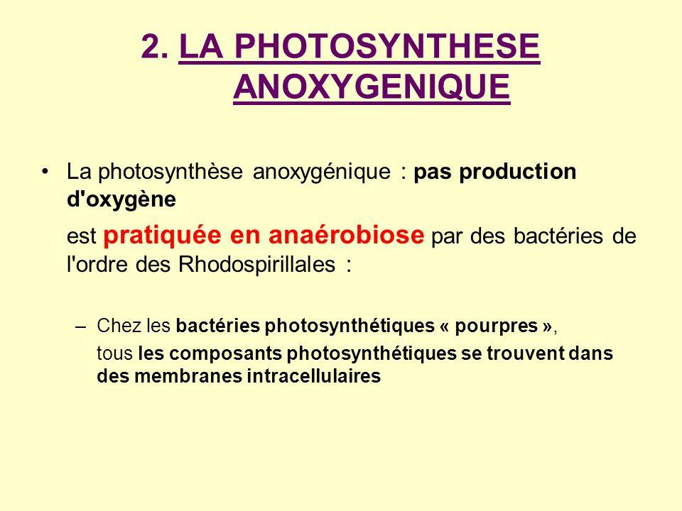 2. LA PHOTOSYNTHESE ANOXYGENIQUE La photosynthèse anoxygénique : pas production d'oxygène est pratiquée en anaérobiose par des bactéries de l'ordre de