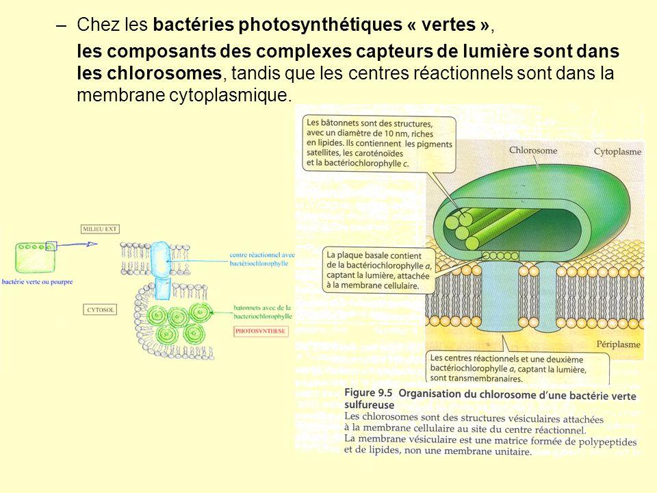 –Chez les bactéries photosynthétiques « vertes », les composants des complexes capteurs de lumière sont dans les chlorosomes, tandis que les centres r
