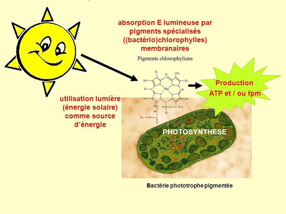 utilisation lumière (énergie solaire) comme source dénergie Production ATP et / ou fpm absorption E lumineuse par pigments spécialisés ((bactério)chlo