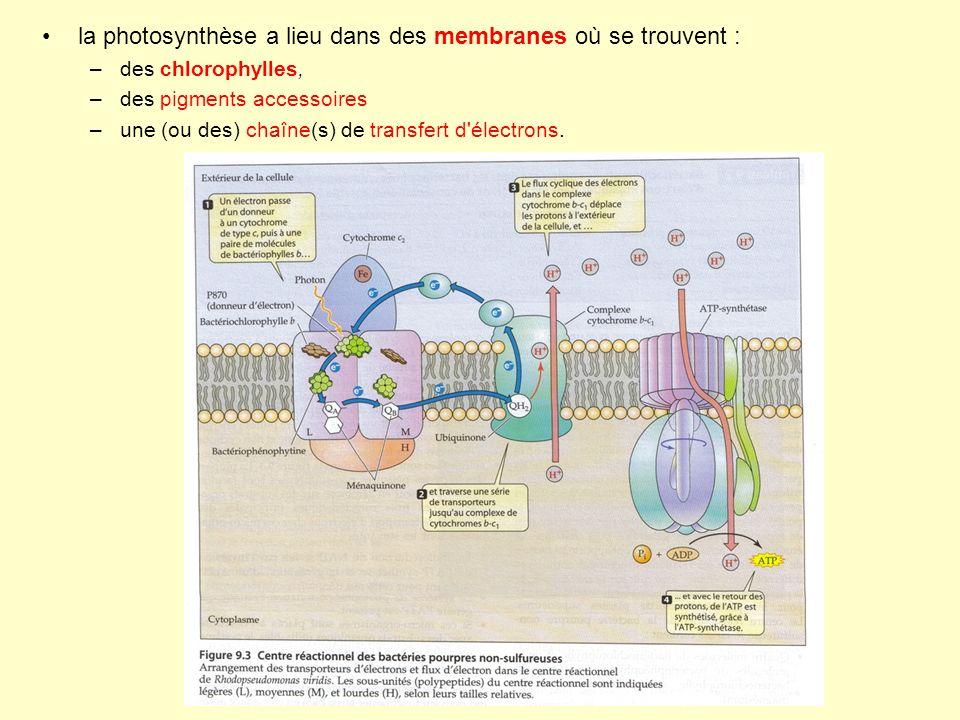 la photosynthèse a lieu dans des membranes où se trouvent : –des chlorophylles, –des pigments accessoires –une (ou des) chaîne(s) de transfert d'élect