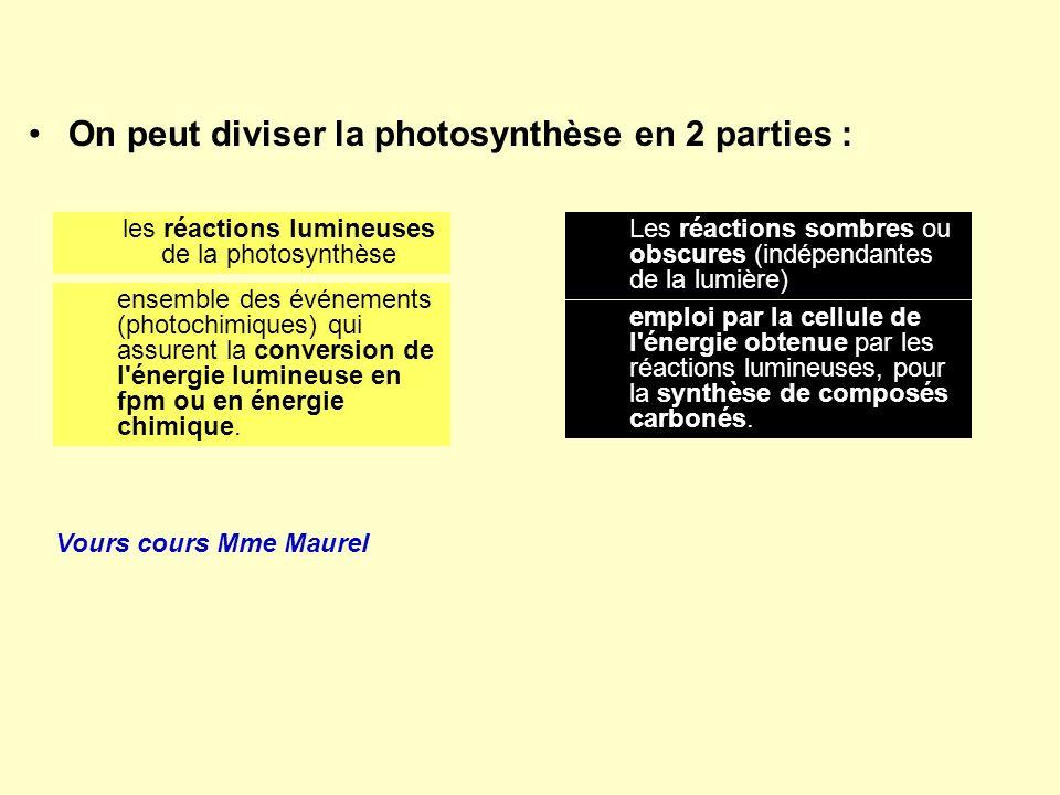 On peut diviser la photosynthèse en 2 parties : les réactions lumineuses de la photosynthèse Les réactions sombres ou obscures (indépendantes de la lu