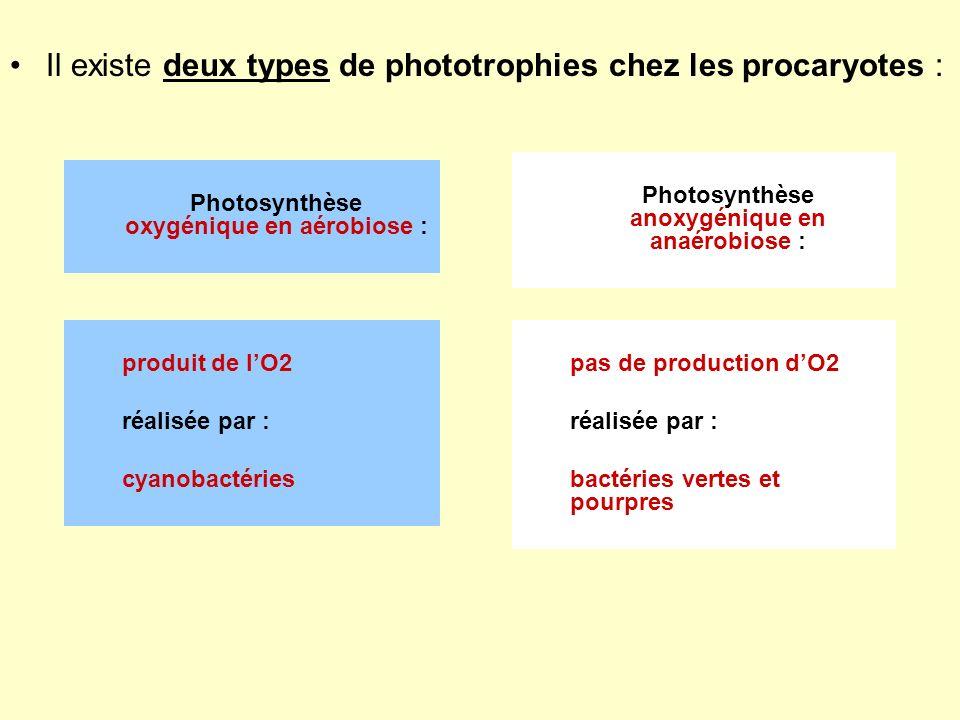 Il existe deux types de phototrophies chez les procaryotes : Photosynthèse oxygénique en aérobiose : Photosynthèse anoxygénique en anaérobiose : produ