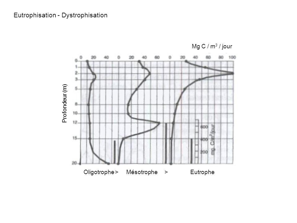 Profondeur (m) Mg C / m 3 / jour Oligotrophe > Mésotrophe > Eutrophe