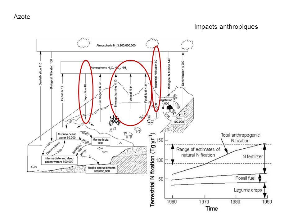 Fixation atmosphérique : Industrielle : 80 Tg Biologique : 32 - 53 Tg Rejets atmosphériques Azote Impacts anthropiques