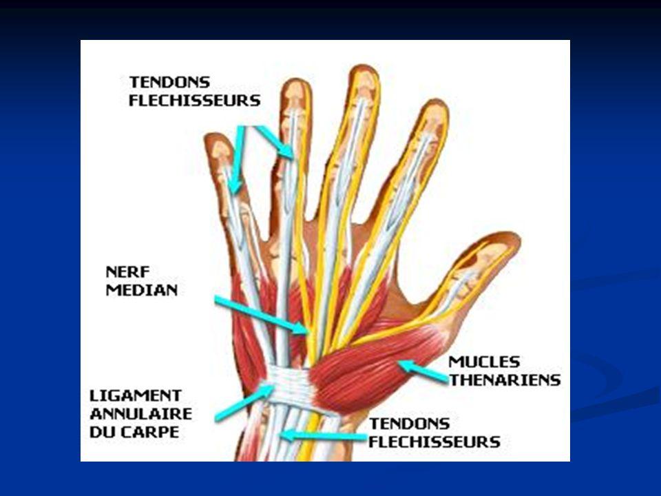 ANATOMIE Après avoir traversé lavant bras sous le fléchisseur superficiel des doigts, le nerf médian pénètre dans la main avec les neuf tendons fléchisseurs par le canal carpien Après avoir traversé lavant bras sous le fléchisseur superficiel des doigts, le nerf médian pénètre dans la main avec les neuf tendons fléchisseurs par le canal carpien