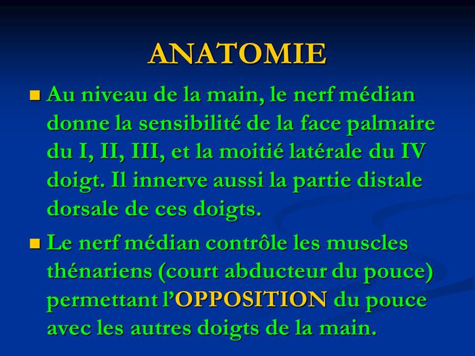 ANATOMIE Au niveau de la main, le nerf médian donne la sensibilité de la face palmaire du I, II, III, et la moitié latérale du IV doigt.