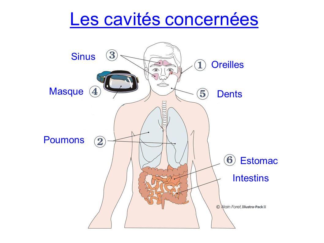 Les cavités concernées Oreilles Dents Estomac Poumons Masque Sinus Intestins