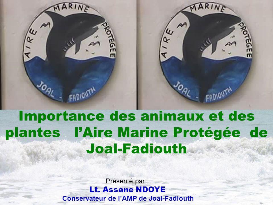 Présenté par : Lt. Assane NDOYE Conservateur de lAMP de Joal-Fadiouth Importance des animaux et des plantes lAire Marine Protégée de Joal-Fadiouth