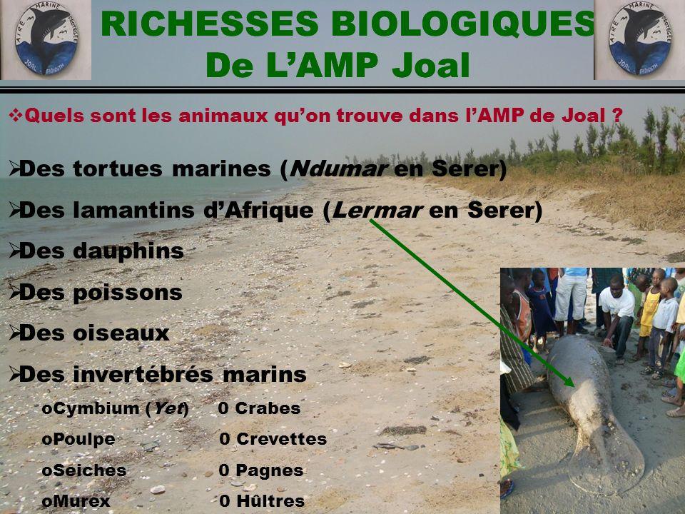 RICHESSES BIOLOGIQUES De LAMP Joal Quels sont les animaux quon trouve dans lAMP de Joal ? Des tortues marines (Ndumar en Serer) Des lamantins dAfrique