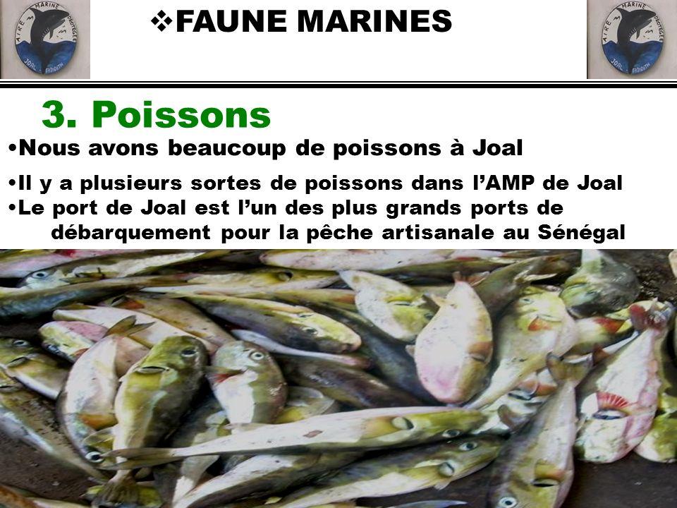 3. Poissons FAUNE MARINES Nous avons beaucoup de poissons à Joal Il y a plusieurs sortes de poissons dans lAMP de Joal Le port de Joal est lun des plu