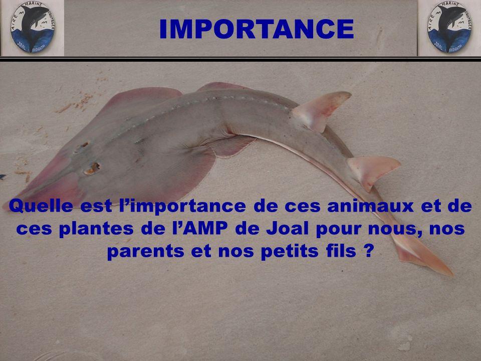 Quelle est limportance de ces animaux et de ces plantes de lAMP de Joal pour nous, nos parents et nos petits fils ? IMPORTANCE