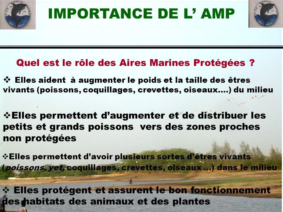 IMPORTANCE DE L AMP Elles permettent daugmenter et de distribuer les petits et grands poissons vers des zones proches non protégées Elles aident à aug