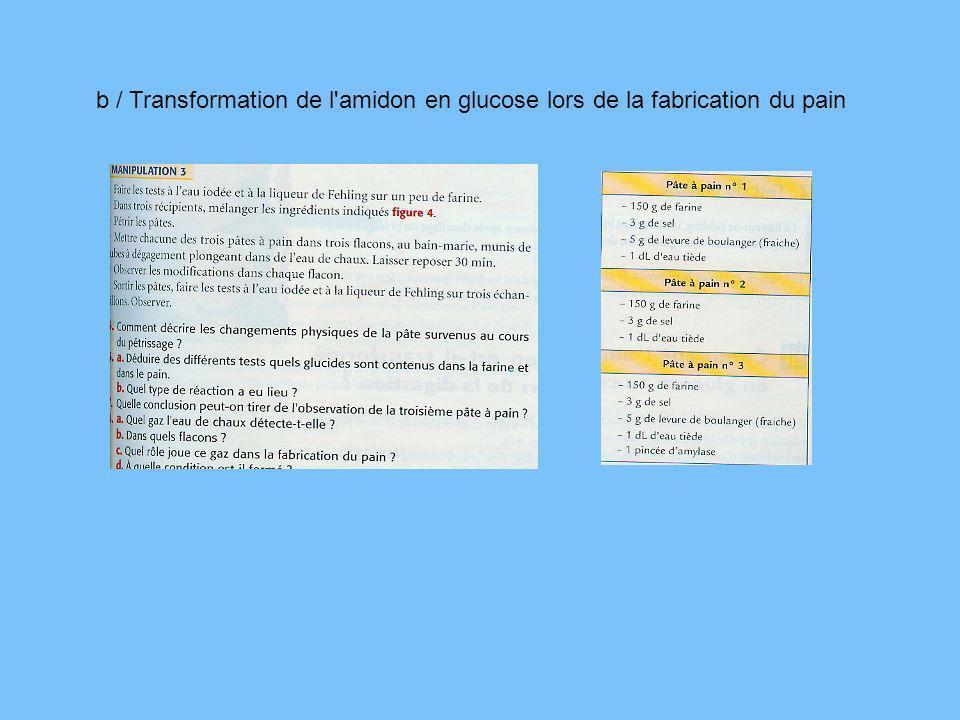 b / Transformation de l'amidon en glucose lors de la fabrication du pain