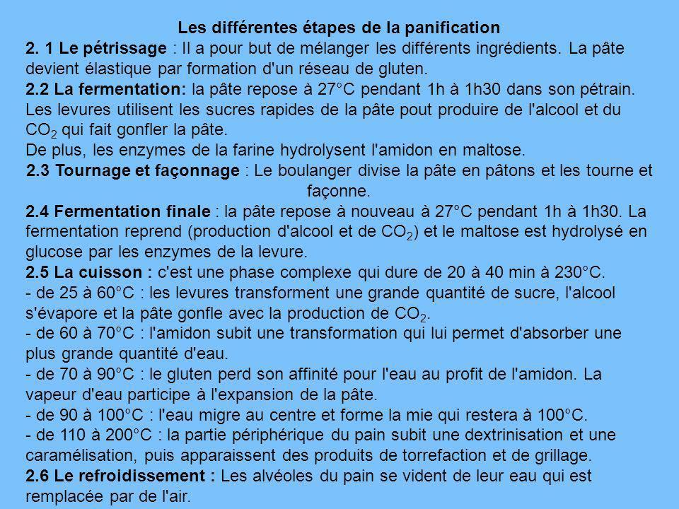 Les différentes étapes de la panification 2. 1 Le pétrissage : Il a pour but de mélanger les différents ingrédients. La pâte devient élastique par for