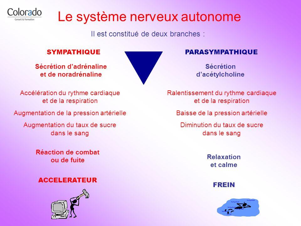 Le système nerveux autonome SYMPATHIQUEPARASYMPATHIQUE Il est constitué de deux branches : Sécrétion dadrénaline et de noradrénaline Accélération du r