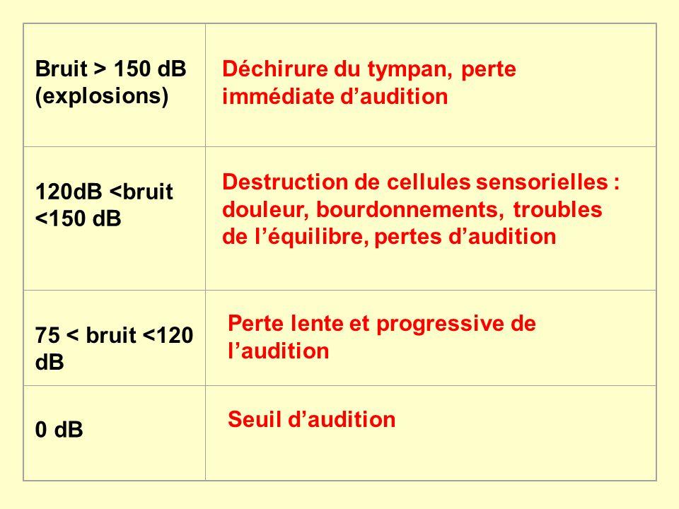 Bruit > 150 dB (explosions) 120dB <bruit <150 dB 75 < bruit <120 dB 0 dB Déchirure du tympan, perte immédiate daudition Destruction de cellules sensor