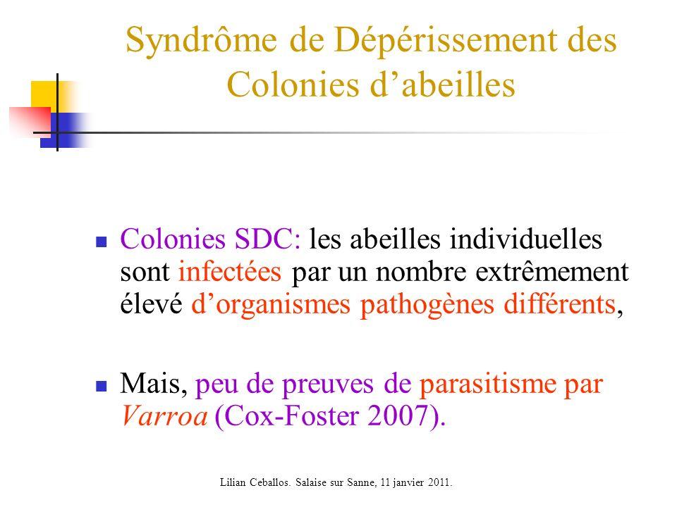 Syndrôme de Dépérissement des Colonies dabeilles Colonies SDC: les abeilles individuelles sont infectées par un nombre extrêmement élevé dorganismes pathogènes différents, Mais, peu de preuves de parasitisme par Varroa (Cox-Foster 2007).