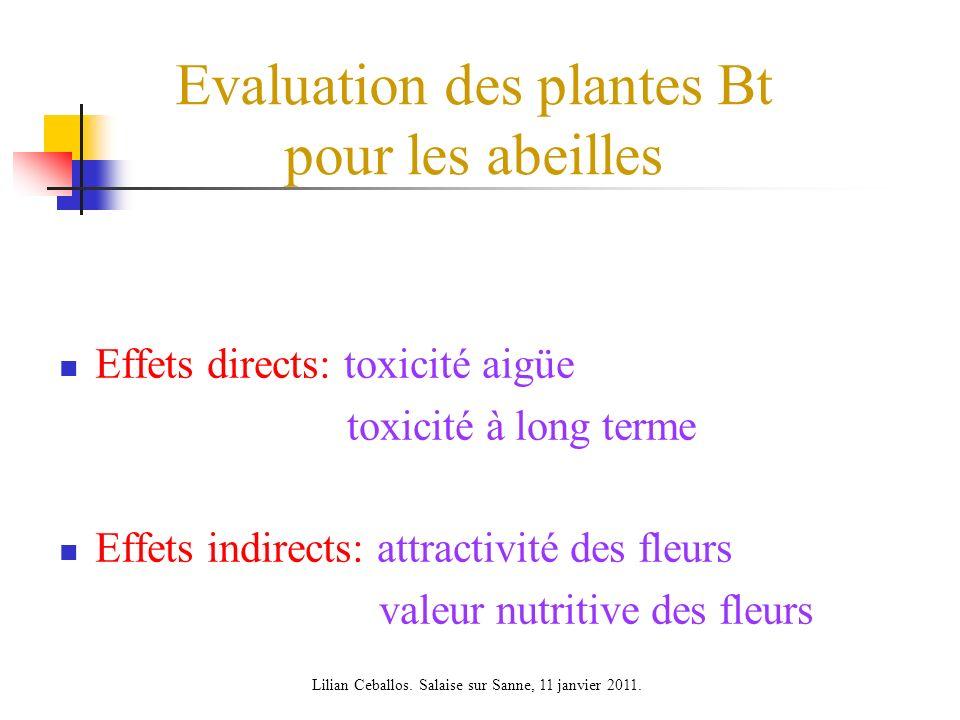 Evaluation des plantes Bt pour les abeilles Effets directs: toxicité aigüe toxicité à long terme Effets indirects: attractivité des fleurs valeur nutritive des fleurs Lilian Ceballos.