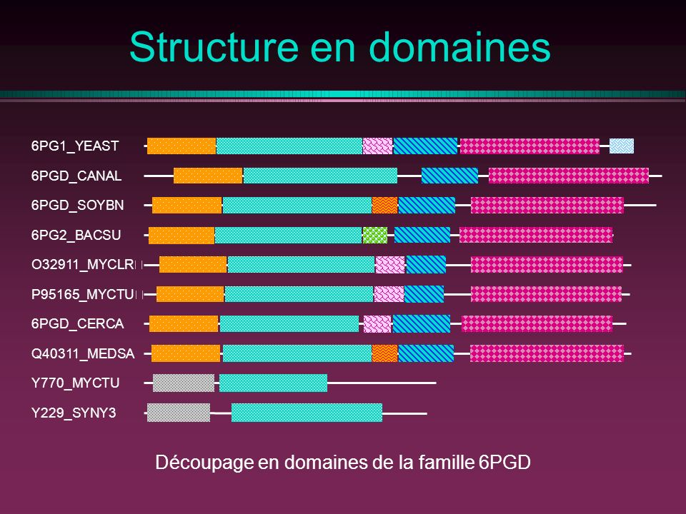 Structure en domaines 6PG1_YEAST 6PGD_CANAL 6PGD_SOYBN 6PG2_BACSU O32911_MYCLR P95165_MYCTU 6PGD_CERCA Q40311_MEDSA Y770_MYCTU Y229_SYNY3 Découpage en