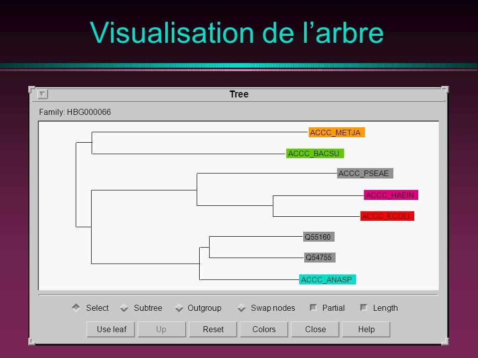 Visualisation de larbre ACCC_ANASP Q54755 Q55160 ACCC_ECOLI ACCC_HAEIN ACCC_PSEAE ACCC_BACSU ACCC_METJA Tree Family: HBG000066 SelectSubtreeOutgroupSw