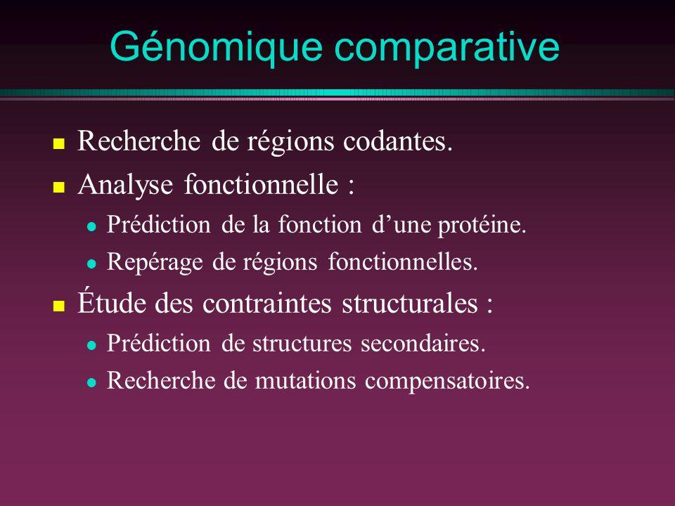 Génomique comparative Recherche de régions codantes. Analyse fonctionnelle : Prédiction de la fonction dune protéine. Repérage de régions fonctionnell
