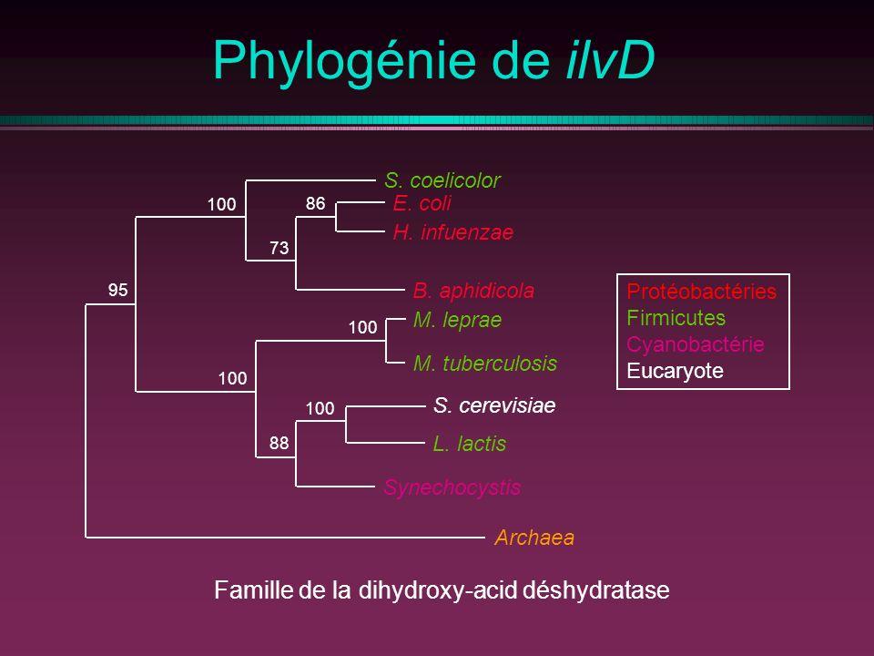 Phylogénie de ilvD Protéobactéries Firmicutes Cyanobactérie Eucaryote E. coli H. infuenzae B. aphidicola M. leprae M. tuberculosis S. cerevisiae L. la