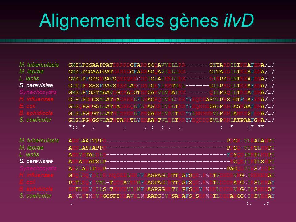 Alignement des gènes ilvD M. tuberculosis GMSLPGSAAPPATDRRRDGFARRSGQAVVELLRR-------GITARDILTKEAFENA/…/ M. leprae GMSLPGSAAPPATDRRRDGFARRSGQAVIELLRR---