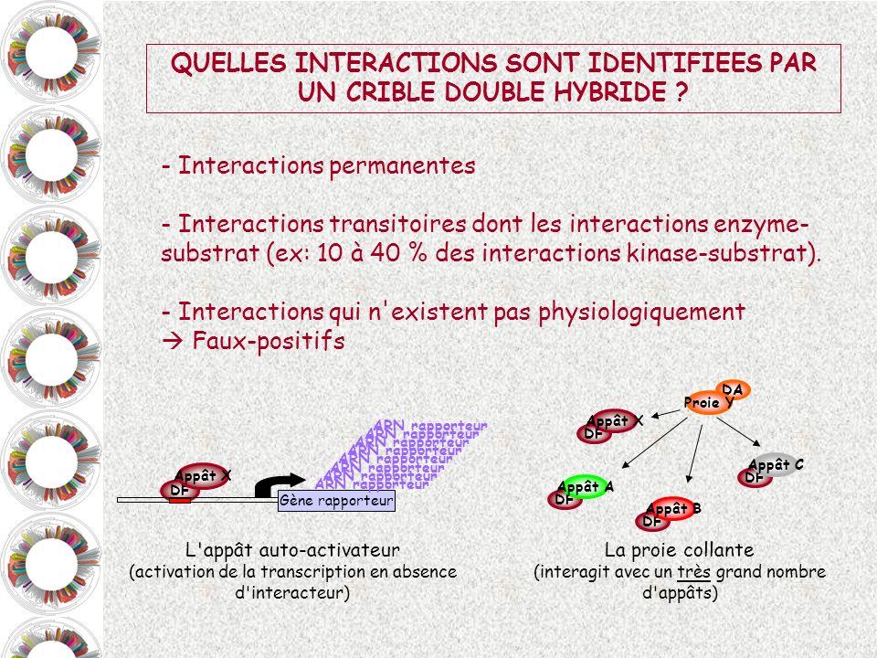 QUELLES INTERACTIONS SONT IDENTIFIEES PAR UN CRIBLE DOUBLE HYBRIDE ? - Interactions permanentes - Interactions transitoires dont les interactions enzy