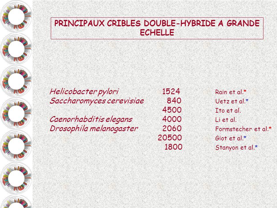 PRINCIPAUX CRIBLES DOUBLE-HYBRIDE A GRANDE ECHELLE Helicobacter pylori 1524 Rain et al.* Saccharomyces cerevisiae 840 Uetz et al.* 4500 Ito et al. Cae