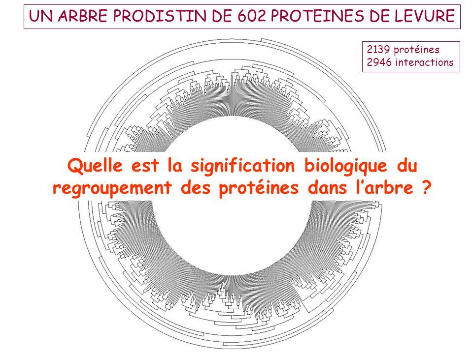 UN ARBRE PRODISTIN DE 602 PROTEINES DE LEVURE Quelle est la signification biologique du regroupement des protéines dans larbre ? 2139 protéines 2946 i