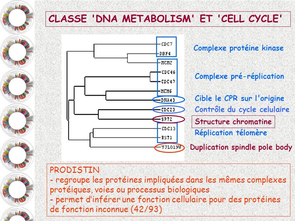 CLASSE 'DNA METABOLISM' ET 'CELL CYCLE' Complexe pré-réplication Complexe protéine kinase Réplication télomère Cible le CPR sur l'origine Contrôle du