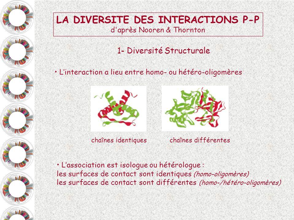 LA DIVERSITE DES INTERACTIONS P-P d'après Nooren & Thornton Linteraction a lieu entre homo- ou hétéro-oligomères Lassociation est isologue ou hétérolo