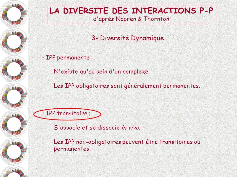 LA DIVERSITE DES INTERACTIONS P-P d'après Nooren & Thornton 3- Diversité Dynamique IPP permanente : N'existe qu'au sein d'un complexe. Les IPP obligat