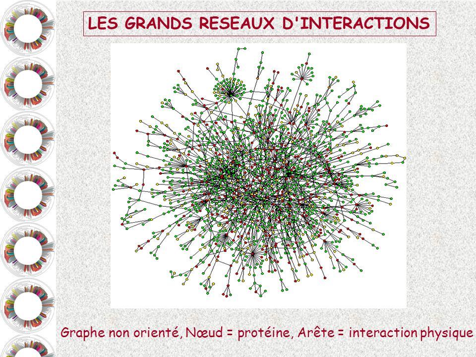 LES GRANDS RESEAUX D'INTERACTIONS Graphe non orienté, Nœud = protéine, Arête = interaction physique