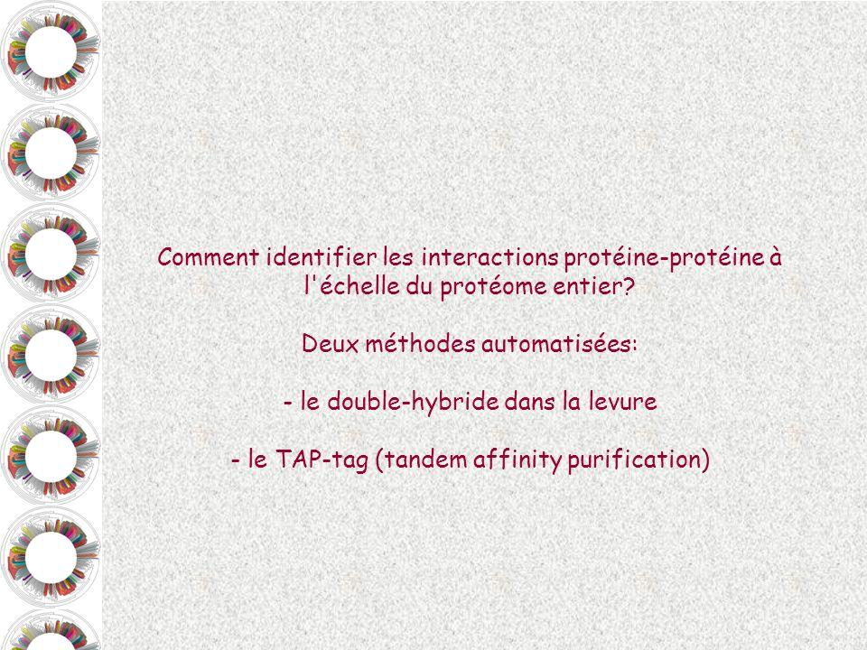 DF DA Gène LA MODULARITE DES FACTEURS DE TRANSCRIPTION, comme principe élémentaire du double hybride dans la levure Facteur de transcription: Domaine de fixation à l ADN DF + Domaine d activation de la transcription DA, capable d activer la machinerie basale de transcription Site de fixation pour le facteur de transcription Facteur de transcription ARN messager DF DA