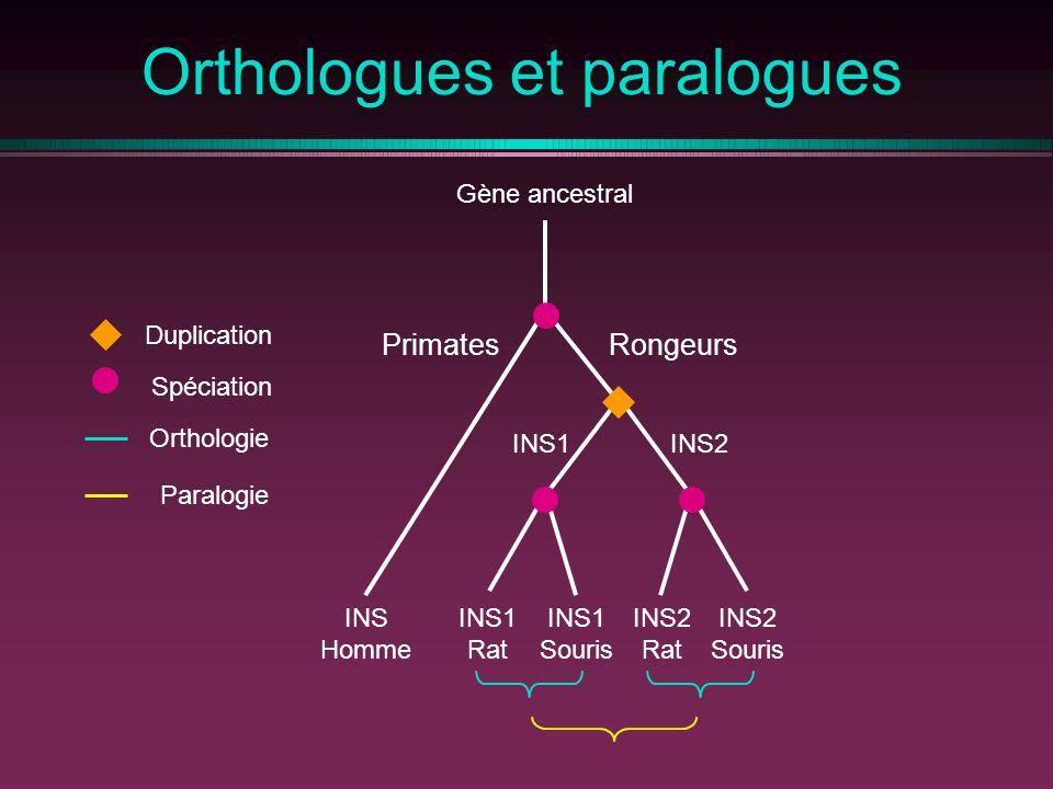 Orthologues et paralogues PrimatesRongeurs Gène ancestral INS Homme INS1 Rat INS1 Souris INS1INS2 Rat INS2 Souris Spéciation Duplication Orthologie Paralogie