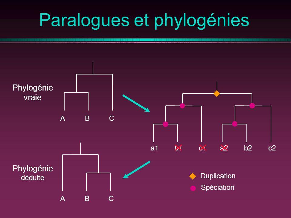 a1b1c1a2b2c2 Duplication Spéciation Paralogues et phylogénies Phylogénie déduite ABCCBA Phylogénie vraie