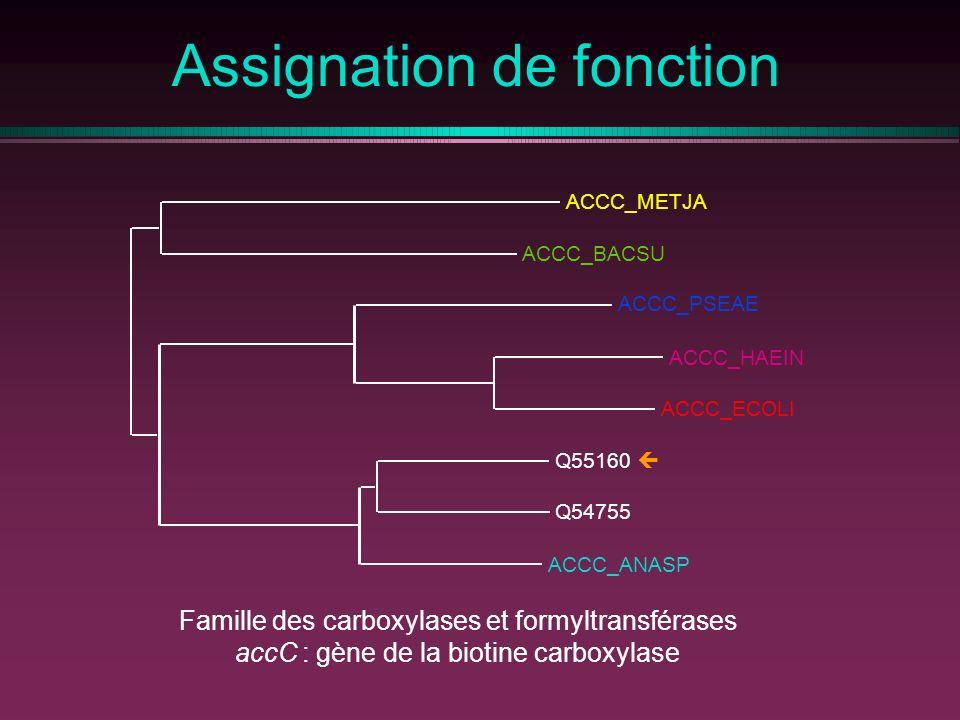 Assignation de fonction Famille des carboxylases et formyltransférases accC : gène de la biotine carboxylase ACCC_ANASP Q54755 Q55160 ACCC_PSEAE ACCC_BACSU ACCC_METJA ACCC_ECOLI ACCC_HAEIN