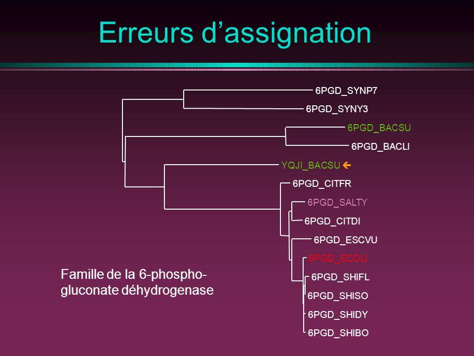 Erreurs dassignation Famille de la 6-phospho- gluconate déhydrogenase 6PGD_SHIBO 6PGD_SHIDY 6PGD_SHISO 6PGD_SHIFL 6PGD_ECOLI 6PGD_ESCVU 6PGD_CITDI 6PGD_SALTY 6PGD_CITFR YQJI_BACSU 6PGD_BACLI 6PGD_BACSU 6PGD_SYNY3 6PGD_SYNP7