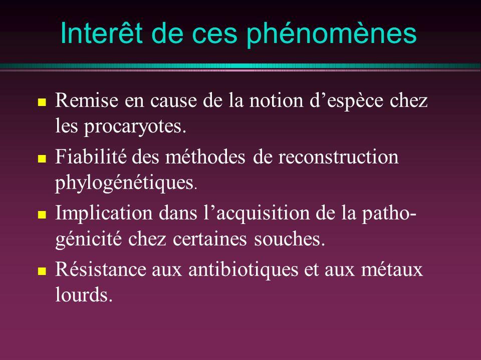 Interêt de ces phénomènes Remise en cause de la notion despèce chez les procaryotes. Fiabilité des méthodes de reconstruction phylogénétiques. Implica